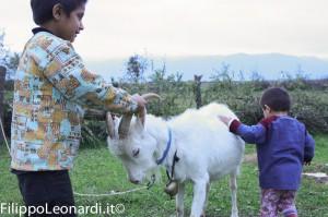 capra-bambini-kosovo
